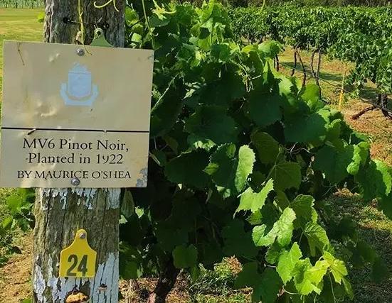 澳大利亚葡萄酒产区