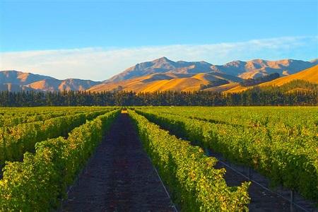 新西兰马尔堡葡萄酒产区
